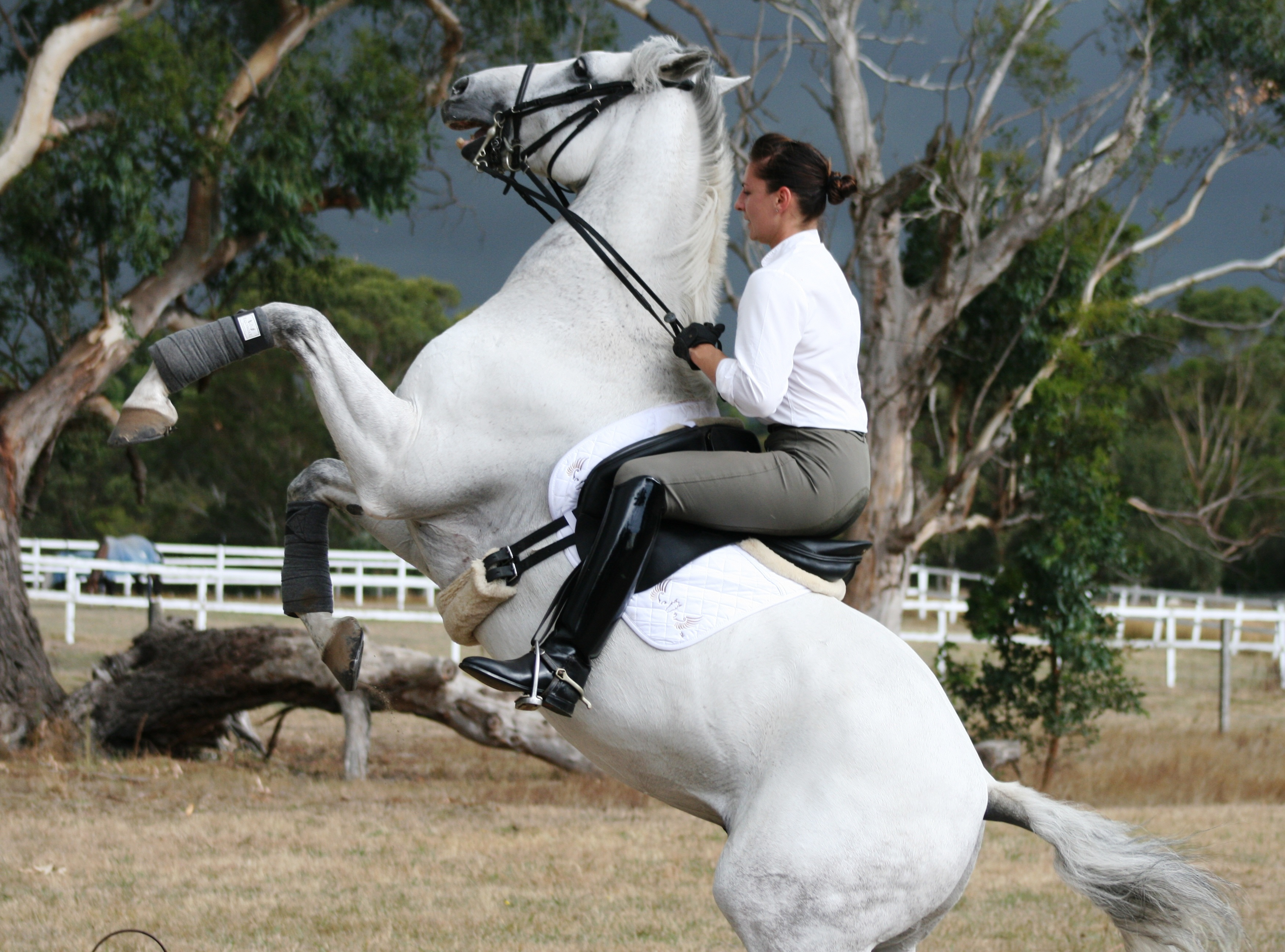 How to Not Fall Off a Horse How to Not Fall Off a Horse new picture