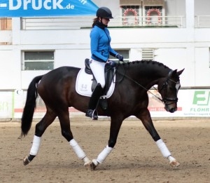 The beautiful young 6yo Jerome - owned by the Kutting family. He was started by Kerstin (riding) and trained classically (no Roll-Kur, draw reins, strong bits) by Wolfgang and his two daughters Kerstin and Kristina.